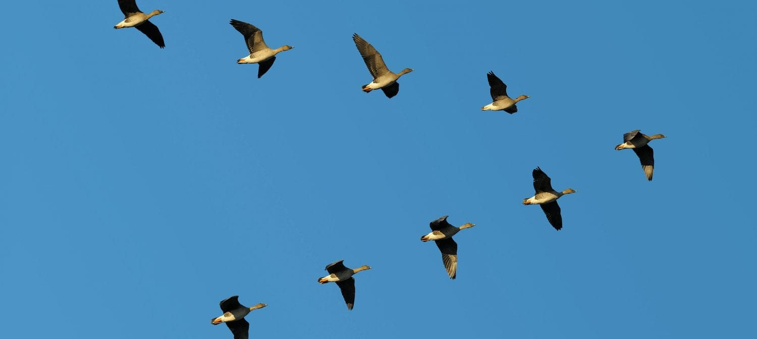 Migration to Office 365